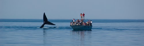 Whale watching, Valdes Peninsula